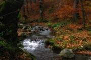Pădurea Valea Bogăţii (Sursa: internet)