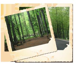 Pădurea Valea Bogăţii